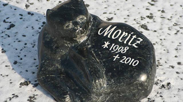 """Gedenkstein für den Kater """"Moritz""""."""